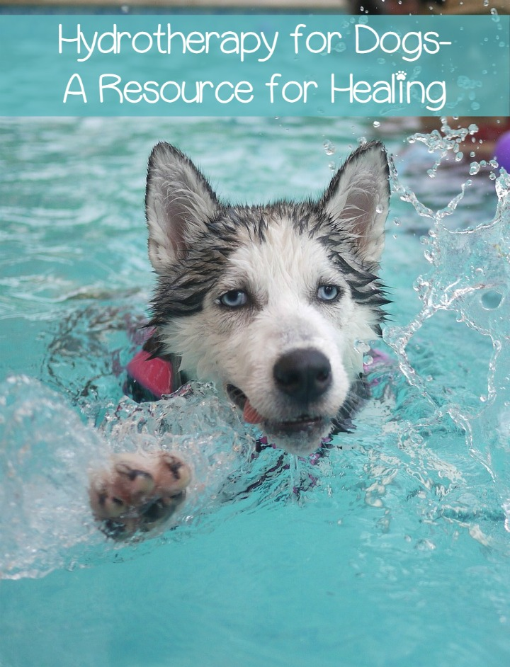 Hydrotherapy for Dogs – A Resource for Healing
