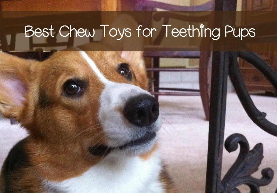 The Best Chew Toys For A Teething Puppy Dogvills