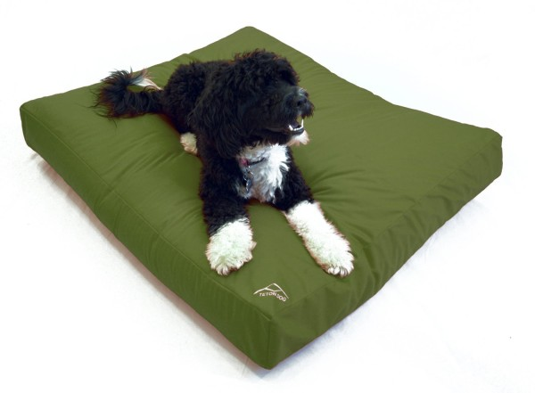 Best Dog Beds For Allergy Sufferers