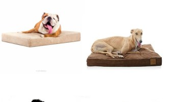 If you have a pooch with sensitive skin, you need to be careful about what he spends his days lounging on! Check out the best hypoallergenic dog beds!