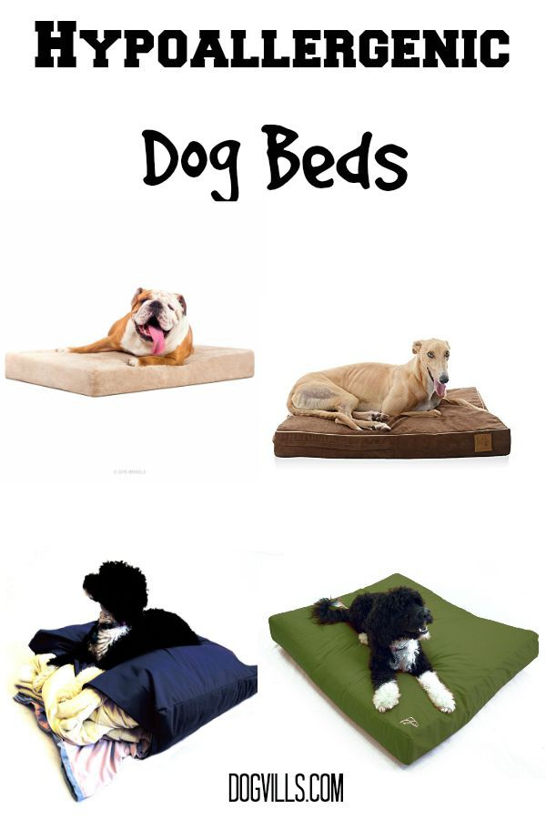 Large Hypoallergenic Dog Beds