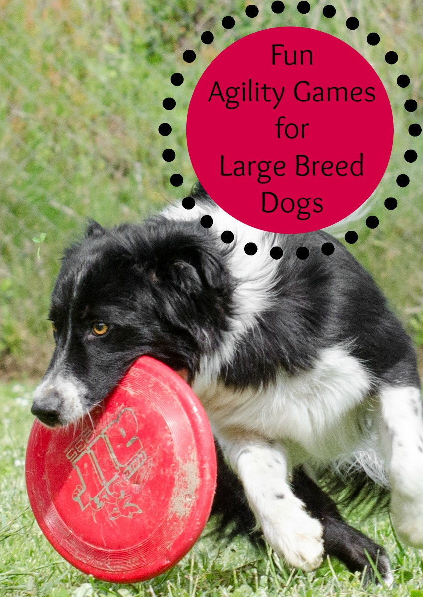 Fun Agility Games For Large Breed Dogs Dogvills