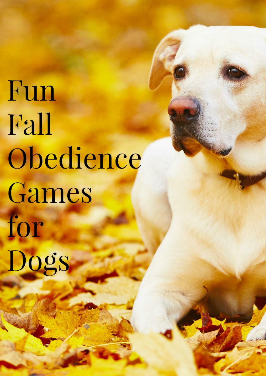 Fun Fall Obedience Training Games for Dogs
