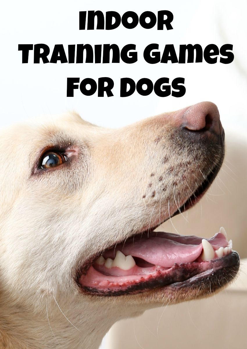 Indoor Training Games Both You and Your Dog Will Love!