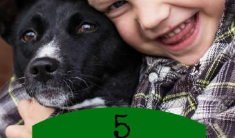 All kids love to play games, all dogs love to play games, so why not get them together with a few fun games for dogs & kids? Check out our favorites!