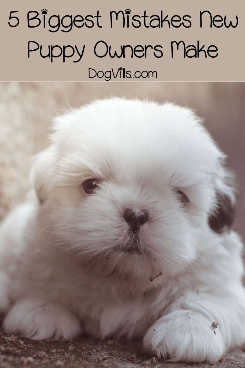 5 Biggest Mistakes New Puppy Owners Make