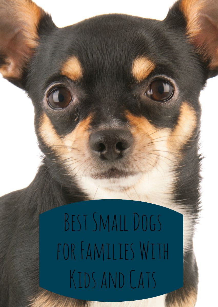 Best Small Dogs for Families with Kids & Cats