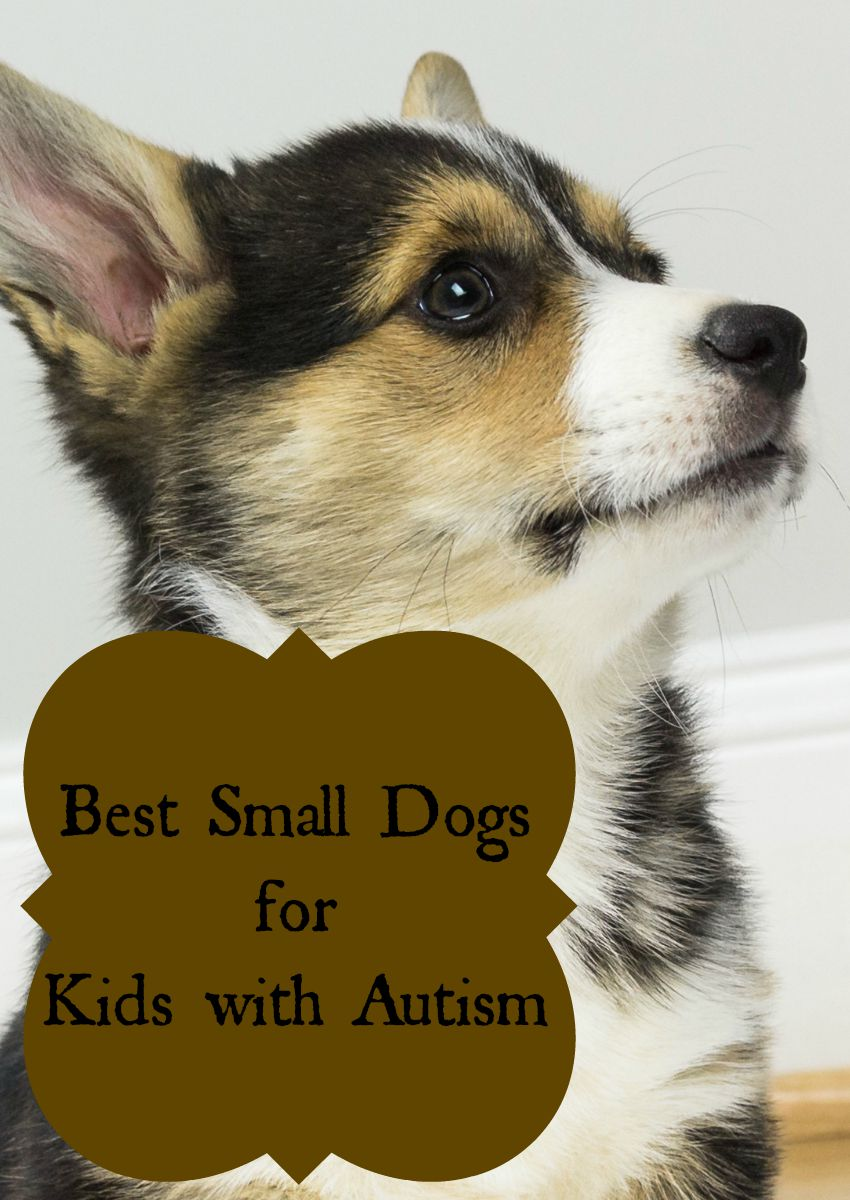 Best Small Dogs For Kids With Autism