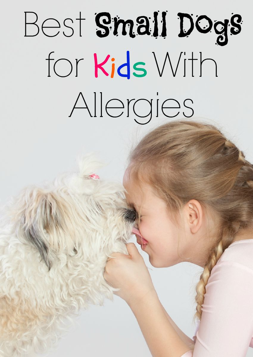 Best Small Dogs For Kids With Allergies Dogvills