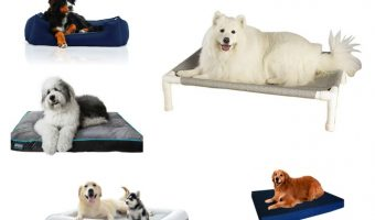 Need help finding the best outdoor waterproof dog beds? We've got you covered with this detailed guide. We review the 8 best dog beds for outdoors to help you make an informed choice. Check our thorough guide.