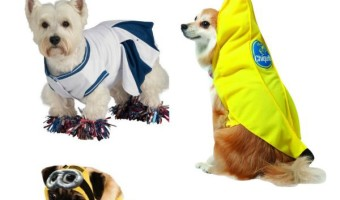 Planning on entering your big beautiful pooch into a Halloween contest? Check out these winning cute large costumes for girl dogs!