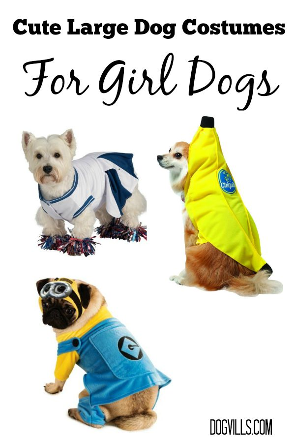 Minion Halloween Costume For Dogs