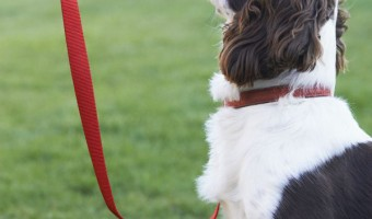 How To Keep Dogs From Chewing Through Their Collar