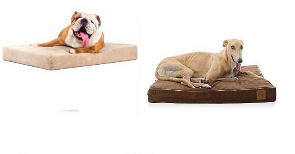 Best Beds For Dogs With Allergies