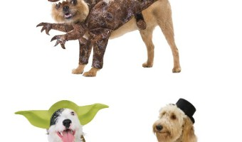 Large Dog Halloween Costumes for Your Handsome Fella!