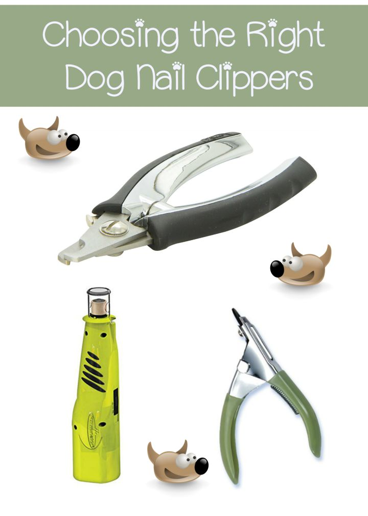 Choosing the Right Dog Nail Clippers