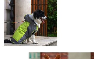 Absolutely Stylish Waterproof Dog Jackets
