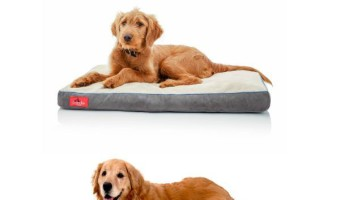 Your giant canine pal will do the dance of joy for you if you bring him home one of these top extra large dog beds with memory foam to sleep on!