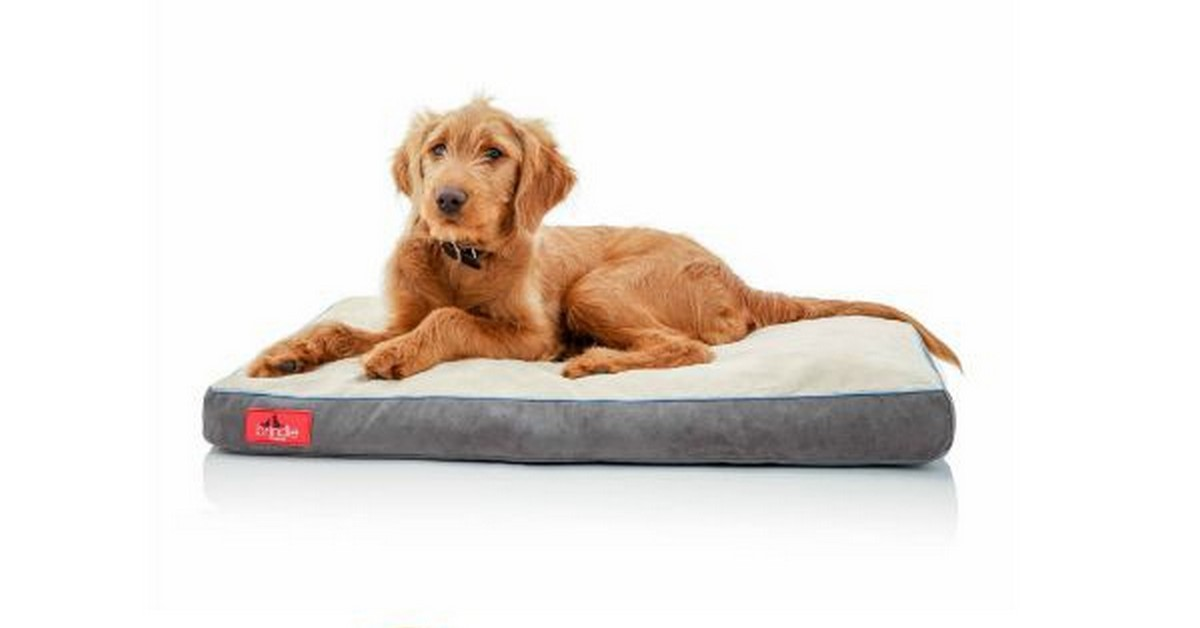 top extra large dog beds with memory foam With best dog bed for extra large dogs