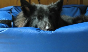 Wondering where to find the best extra large dog beds that are waterproof? Check out our favorite retailers first for the best deals!