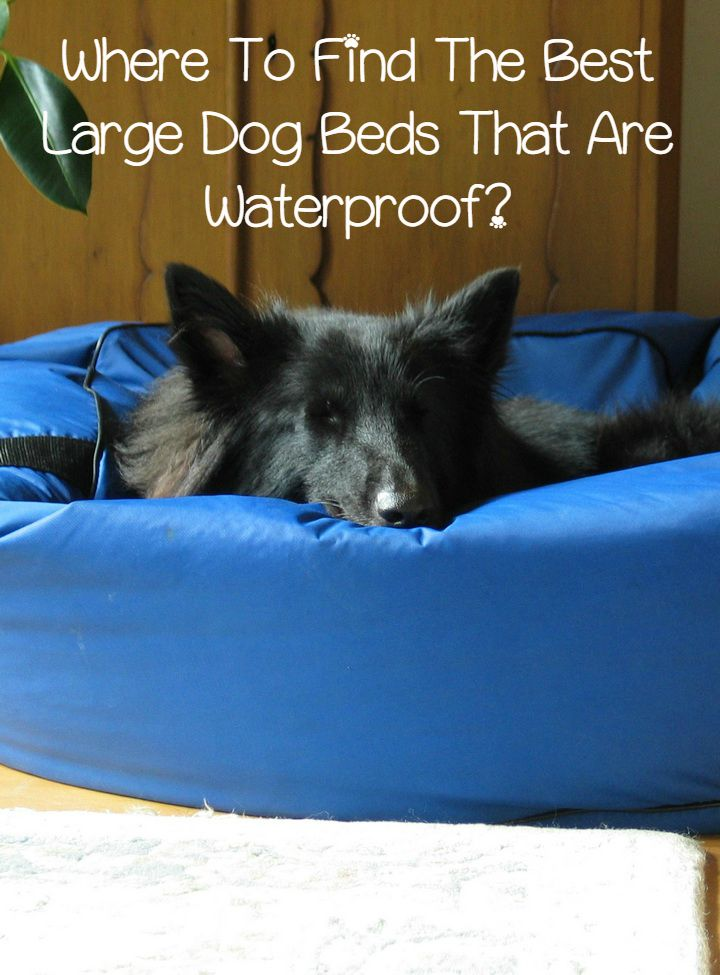 Where To Find The Best Large Dog Beds That Are Waterproof