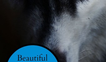 Honor your beloved family companions that have crossed the Rainbow Bridge with these beautiful and tasteful memorials for dogs during World Animal Remembrance Month.