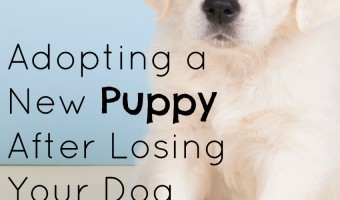 Thinking about adopting a new puppy after losing your dog? Read on for tips to make the transition easier on your whole family.