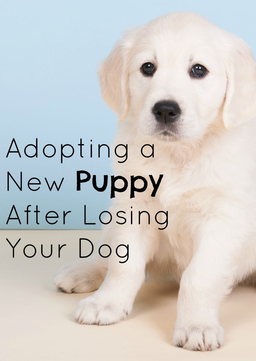 Adopting a New Puppy After Losing Your Dog