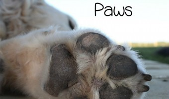 Itchy, sore, or red dog paws can be a symptom of allergies. Dog paws that are itchy, red, or sore are usually related to allergies and excessive licking.
