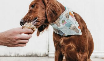 Pick the best wet hypoallergenic #dog food for your pooch with our handy list of the top brands!