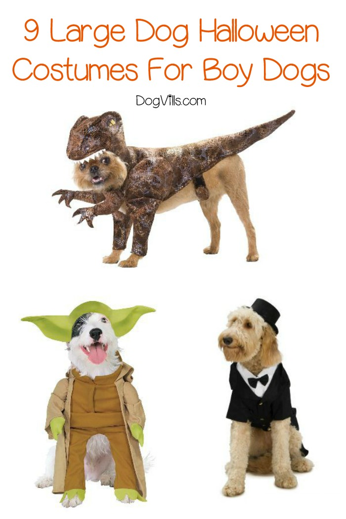 9 Large Dog Costumes Even