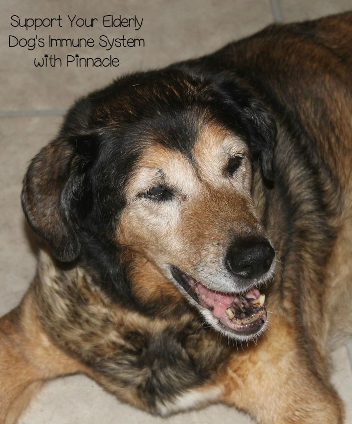 Introducing Pinnacle Grain Free Dog Foods for Healthy Immune Systems #PinnacleHealthyPets