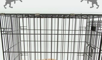 Getting your dog to stop barking in its crate can be a challenge. It can be difficult to train them to stop barking when they are acting pitiful and sad.