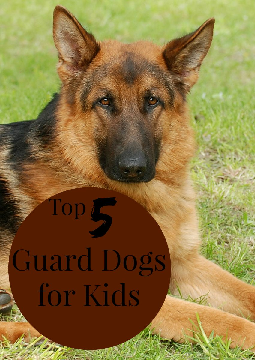 Top 5 Guard Dogs for Kids