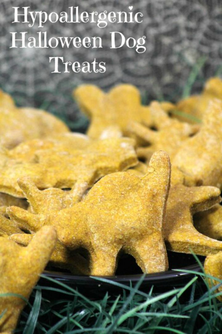 Pumpkin Doggy Donut Holes Hypoallergenic Dog Treat Recipe