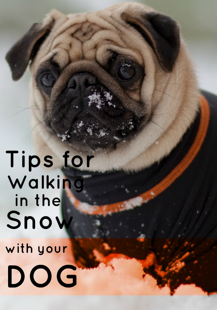Tips for Walking in the Snow With Your Dog