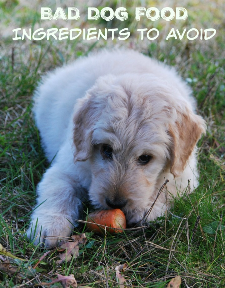 Bad Dog Food: What's In It & How Do You Avoid It?