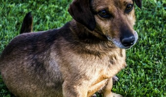 Chronic skin irritation can be a sign of underlying issues. If your dog has chronic skin irritation, your vet will look at both environment and diet. Learn more about coping with your dog's skin issues.