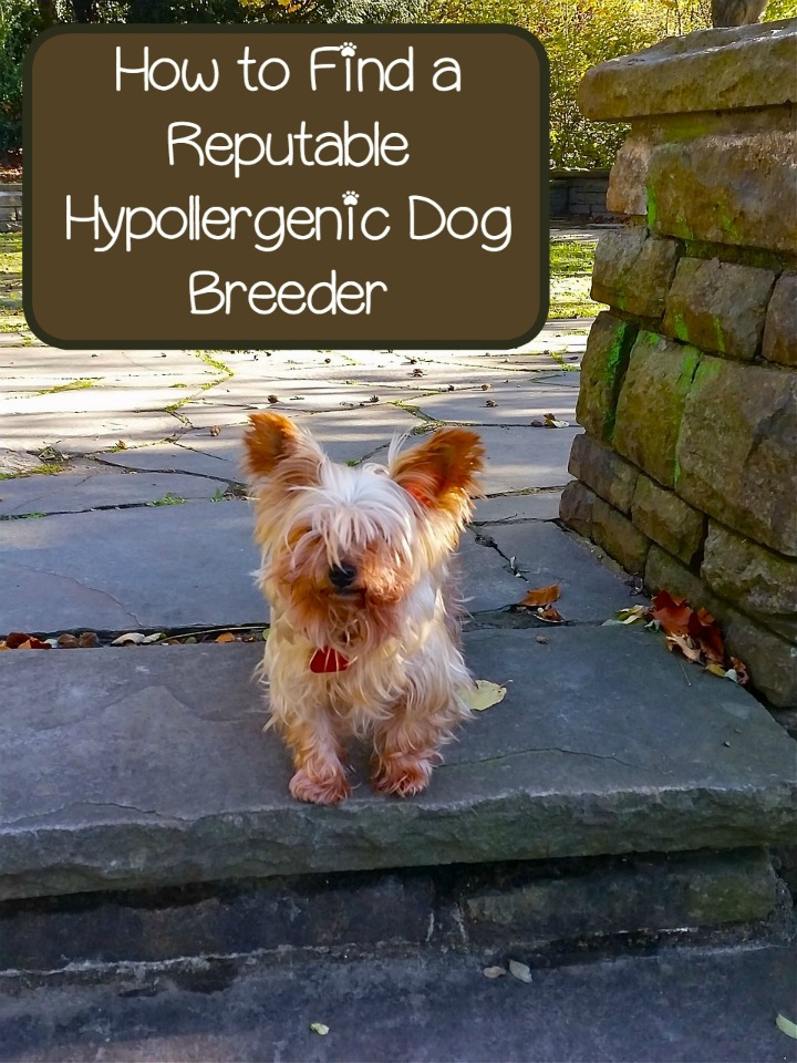 Tips for Finding Reputable Hypoallergenic Dog Breeders