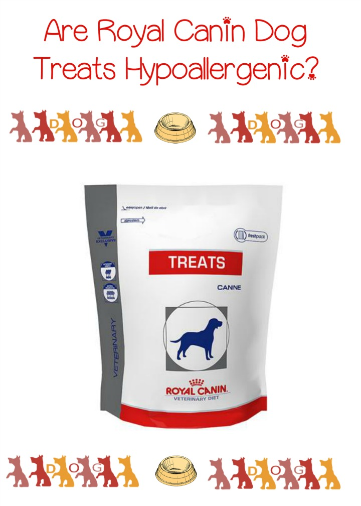 Royal Canin City Dog Food