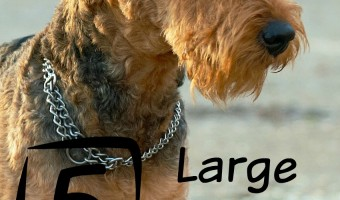 5 large dog breeds that don't shed