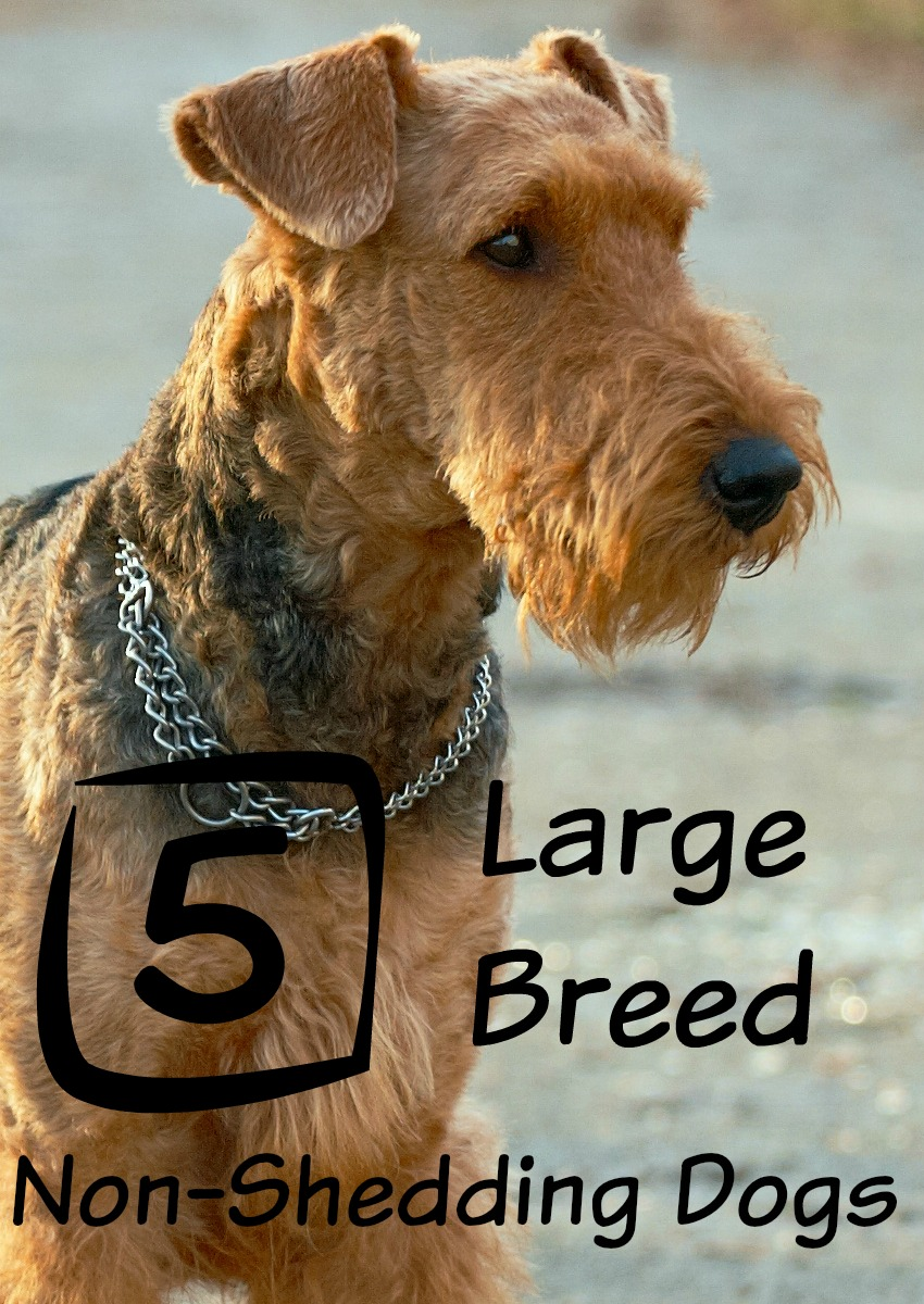 Dog Breeds Shedding List
