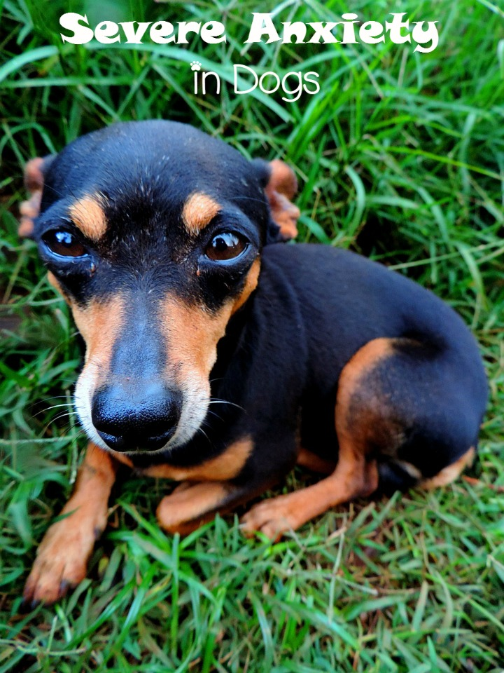 Handling Severe Anxiety in Dogs