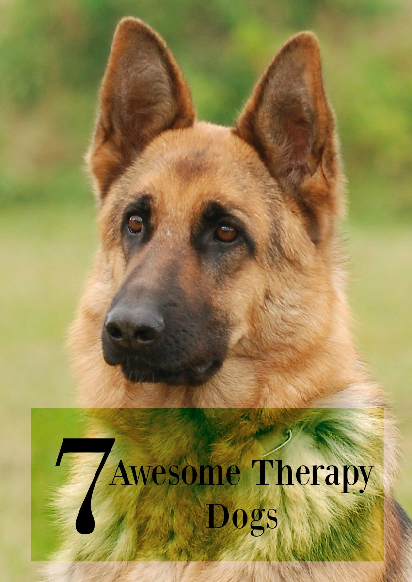 7 Awesome Therapy Dogs That Love to Help You!