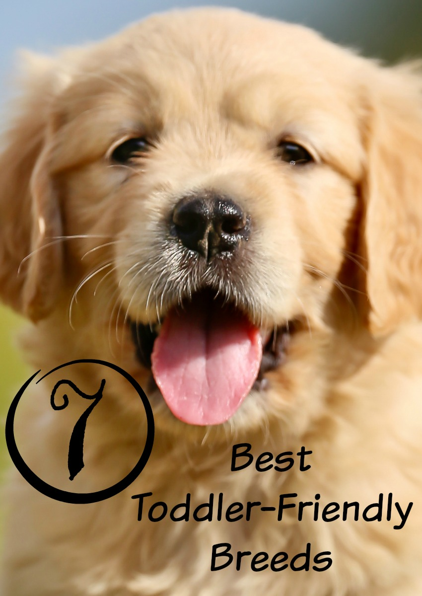7 Best Toddler-Friendly Breeds