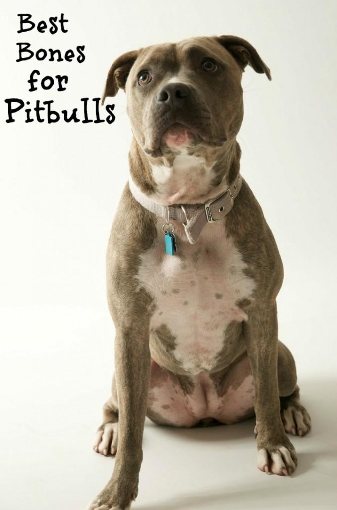 Best Dog Bones for Pit Bulls - DogVills