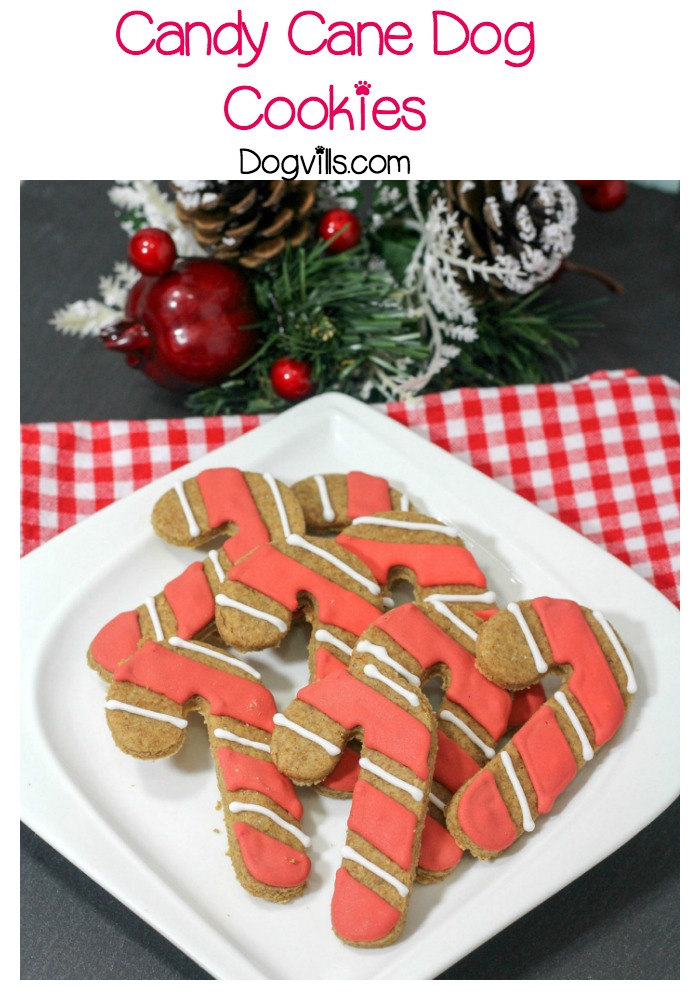 Holiday Dog Treats Recipe: Candy Cane Cookies