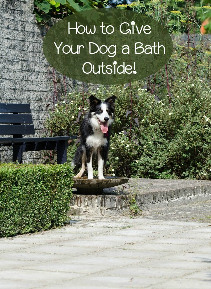 How To Give Your Dog A Bath Outside