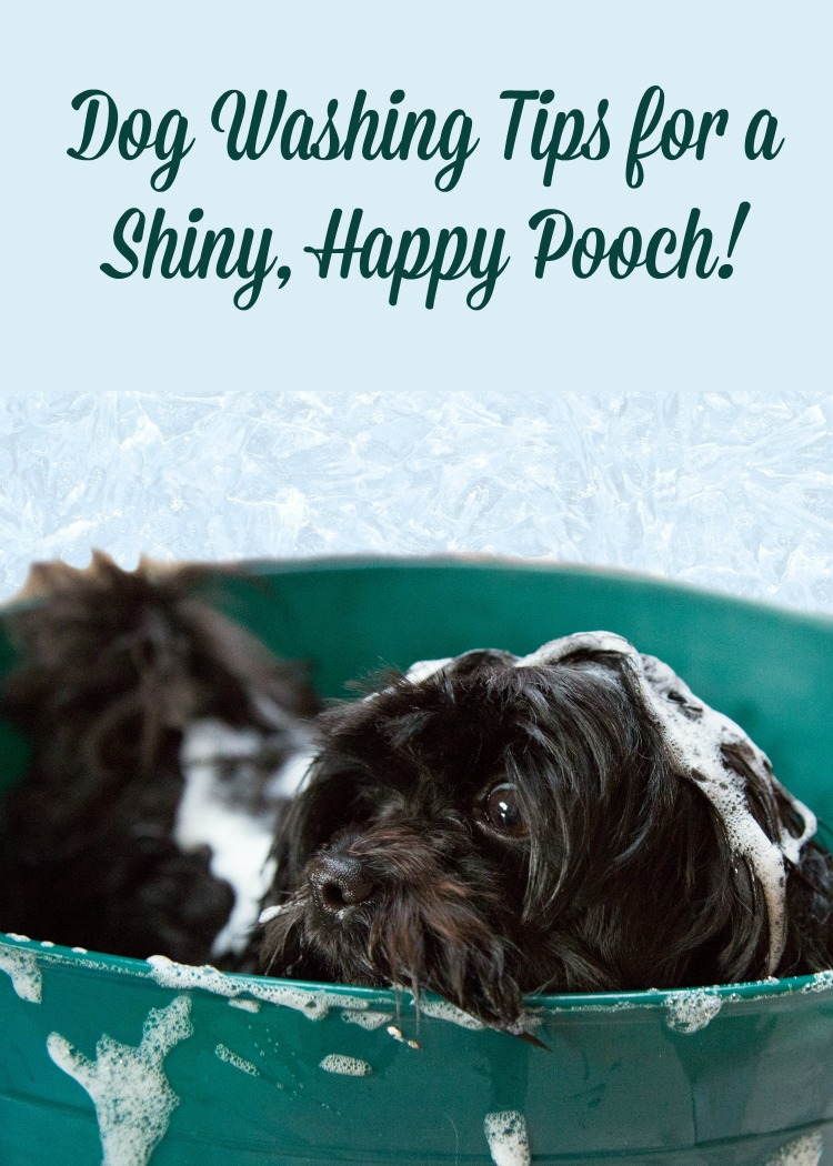 Dog Washing Tips for a Shiny, Happy Pooch…and Relatively Dry YOU!