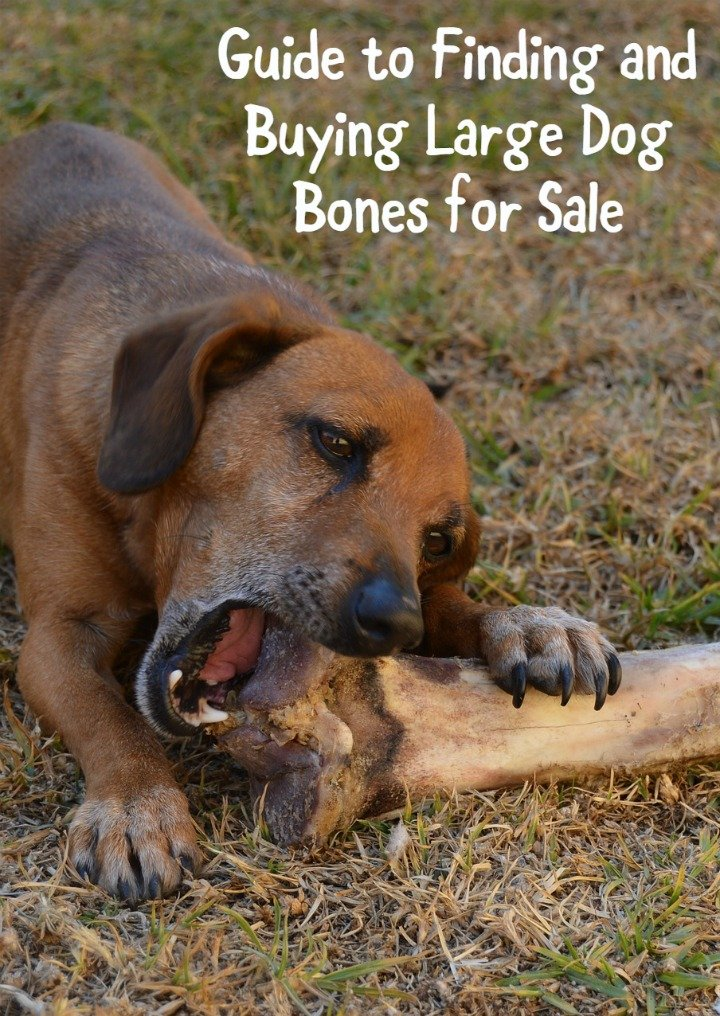 Guide to Finding the Best Big Dog Bones for Sale